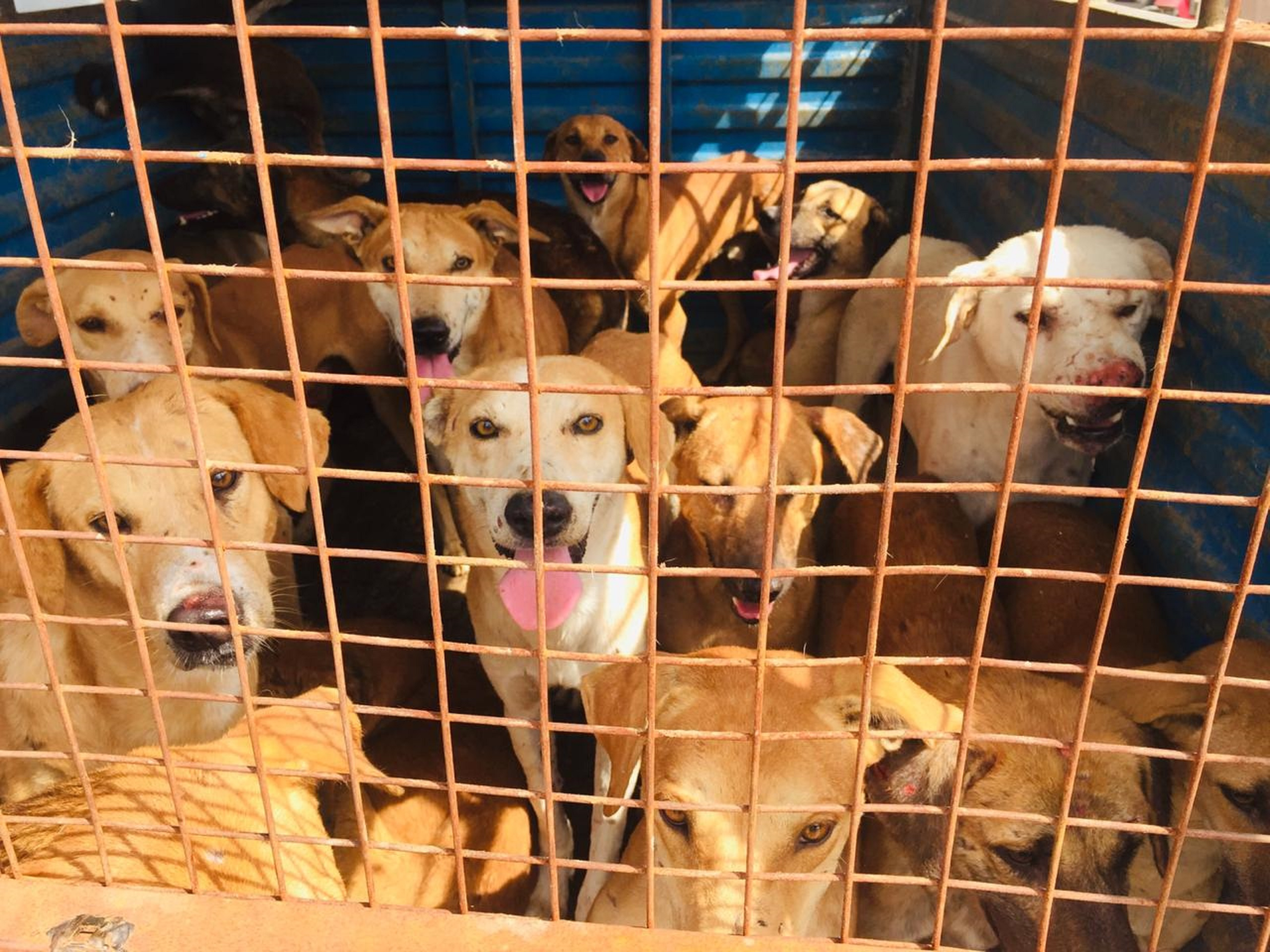 JAISALMER Dog Catch Campaign 4